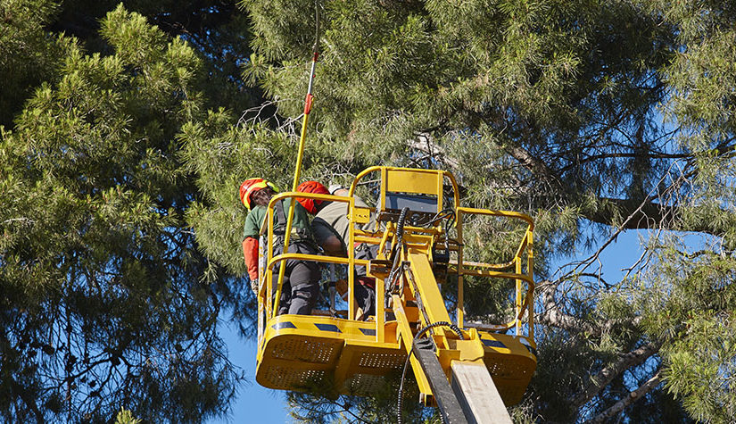 9 Misleading Things You May Hear About Trees And Tree Pruning